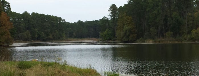 Davy Crockett National Forest is one of National Recreation Areas.