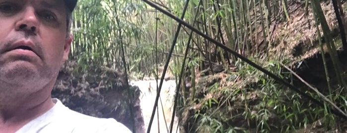 bamboo forest and waterfalls is one of Maui.