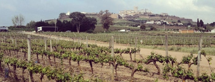 Encostas de Estremoz is one of Wine World.