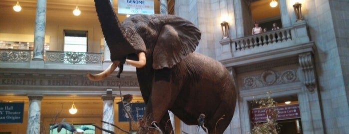 Smithsonian National Museum of Natural History is one of DC Museums.