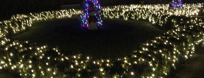 Lasdon Park, Arboretum & Veterans' Memorial is one of E : понравившиеся места.