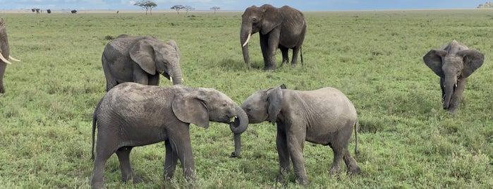 Serengeti National Park is one of สถานที่ที่ S👄 ถูกใจ.