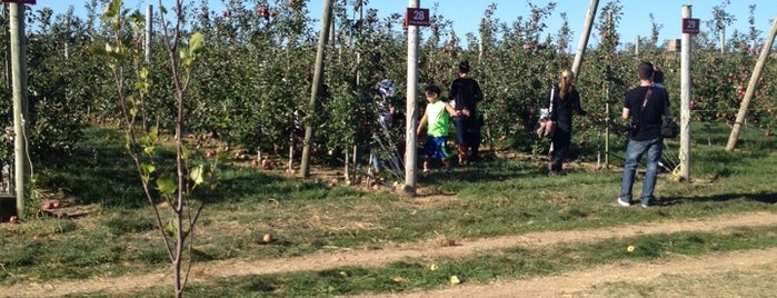 Harbes Farm Orchard is one of NYC Quick Escapes.