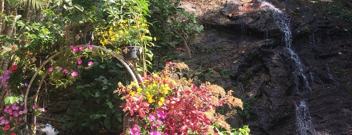 Doi Pui Waterfall Garden is one of Trips / Thailand.