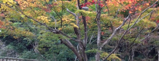 うかい竹亭 is one of lieu a Tokyo 3.