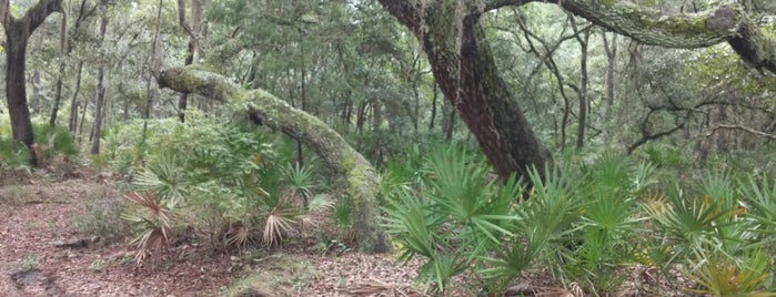 Ocala National Forest is one of National Recreation Areas.
