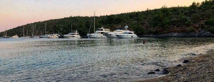 Arpabükü is one of Deniz : понравившиеся места.
