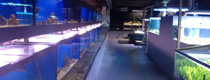 Brussels Aquarium is one of Brussels Spots #4sqCities.
