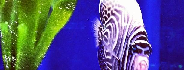 Bluefish Aquarium is one of สถานที่ที่ Patrick ถูกใจ.
