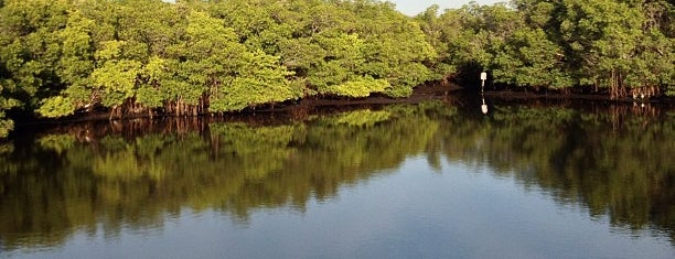 Weedon Island Preserve is one of Justinさんのお気に入りスポット.