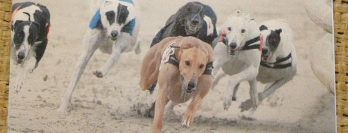 Brighton & Hove Greyhound Stadium is one of Locais curtidos por Ricardo.