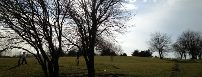 The Hill Disc Golf Course is one of Jared's Liked Places.