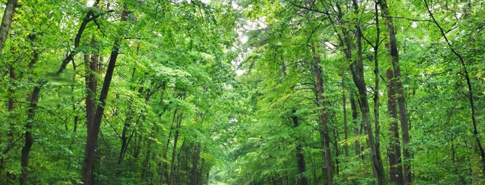 Prince William Forest Park is one of National Recreation Areas.