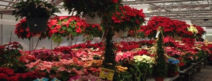 Rohsler's Allendale Nursery & Florist is one of Orte, die Michael gefallen.