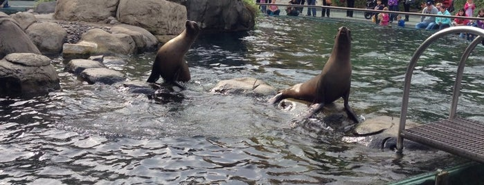 Sea Lion - Central Park is one of Locais curtidos por Cristina.