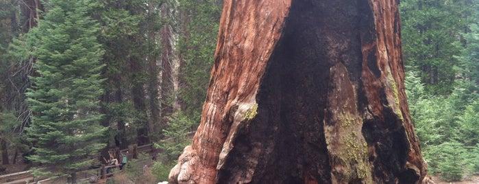 General Grant Tree is one of Orte, die Chrissy gefallen.