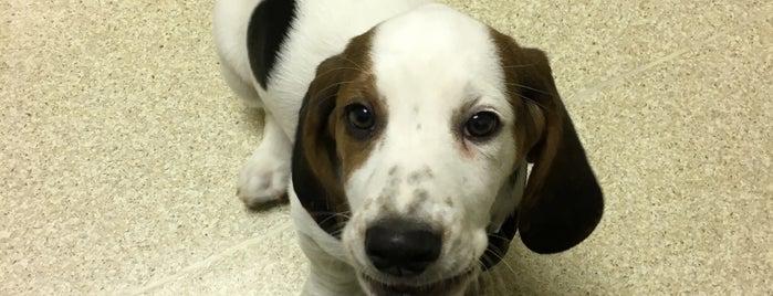 West Lynn Veterinary Clinic is one of Tempat yang Disukai Shelly.