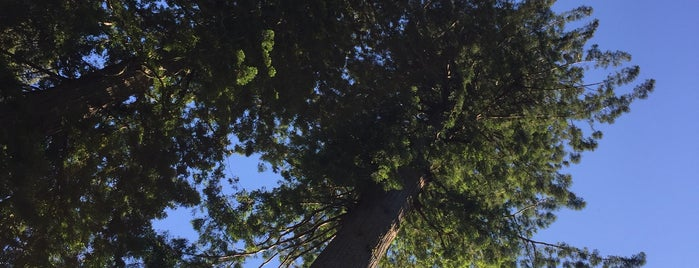 Tall Trees Grove is one of Posti che sono piaciuti a eric.