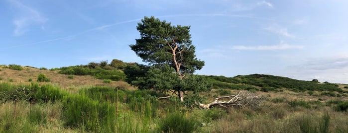 Dornbusch is one of Oostzeekust 🇩🇪.