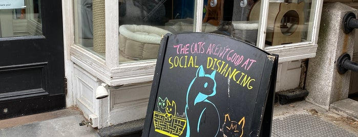 Brooklyn Cat Cafe is one of NYC's Best Cafés&Pastries 🍰🍮🍪☕️.