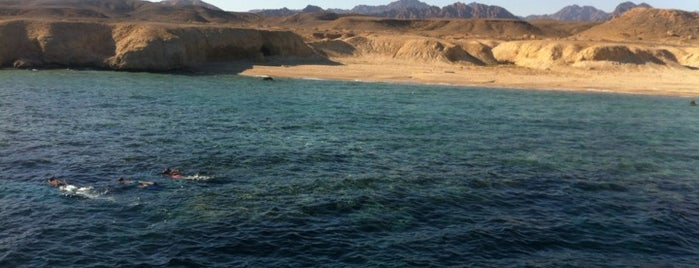 Ras Mohammed National Park is one of Great Scuba.