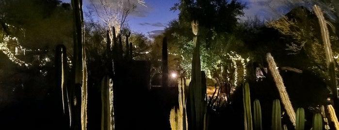 Las Noches de las Luminarias is one of phoenix.