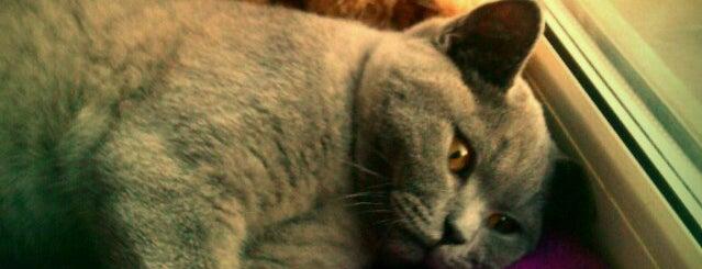 Владимирский просп., 3 is one of Favorite Cats.