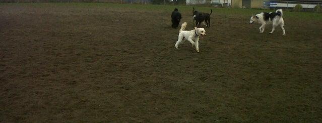 Off Leash Dog Area @ Beban Park is one of Dog Parks.