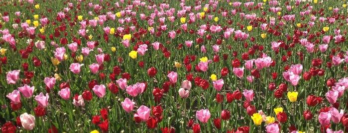 Takino Suzuran Hillside Park is one of Hokkaido.