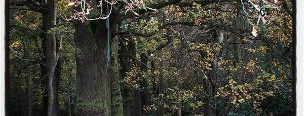 Sutton Park is one of Best UK #PhotoSpots.