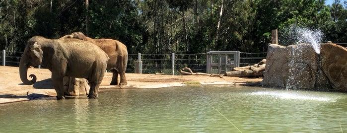 San Diego Zoo is one of สถานที่ที่ Bryan ถูกใจ.
