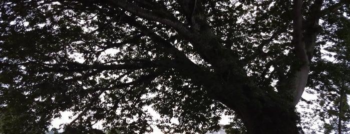 La Ceiba Gráfica is one of Tempat yang Disukai Mayita.