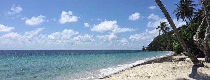 Playa Manzanillo is one of Francisco : понравившиеся места.