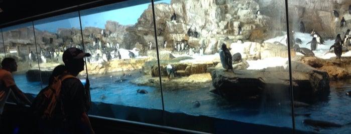 Penguin Encounter is one of SeaWorld San Antonio.