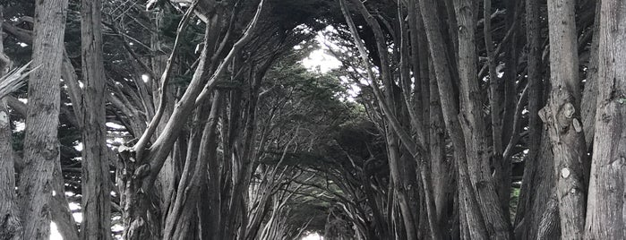 Cypress Tunnel is one of California.