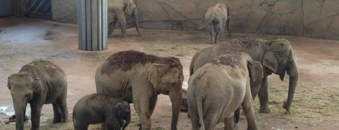Kölner Zoo is one of Deutschland | Sehenswürdigkeiten & mehr.