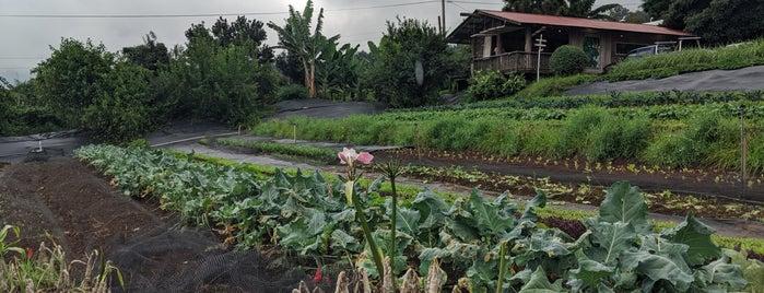 O'o Farm is one of Hawaii 2013.