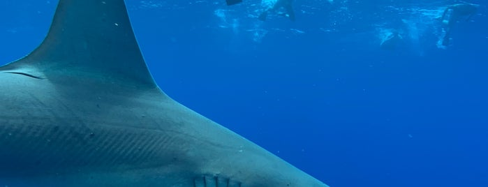 North Shore Shark Adventures is one of When you travel.....