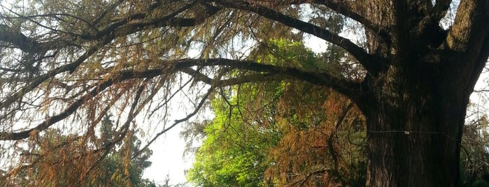 Bosque de Chapultepec is one of สถานที่ที่ Álex ถูกใจ.