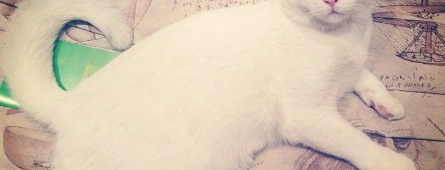 Кискин Дом is one of Favorite Cats.