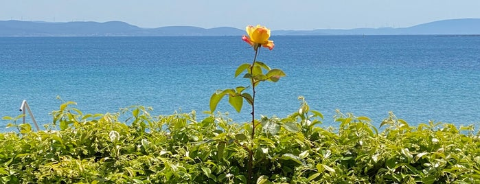 MANAL Beach & Clup is one of Lugares favoritos de Mehmet Ali.