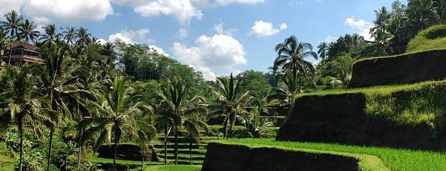 Tegallalang Rice Terraces is one of DENPASAR - BALI.