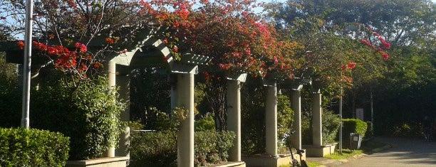 Praça dos Pássaros - Villa Lobos is one of สถานที่ที่ M@Zenaide ถูกใจ.