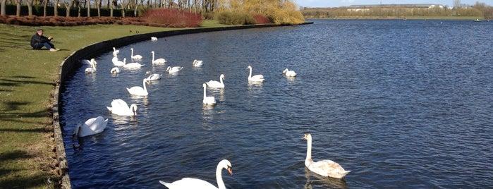 Willen Lake is one of Lugares favoritos de Carl.