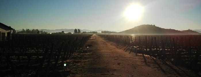 Viña Los Vascos is one of Wines.