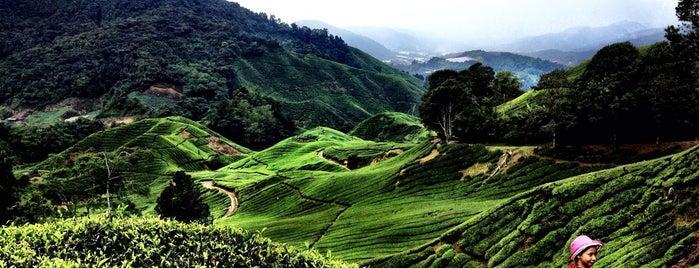 Puncak Gunung Brinchang is one of Cameron.