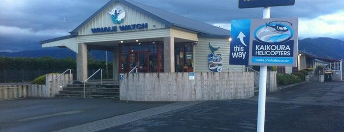 Whale Watch Kaikoura is one of Nuova Zelanda.