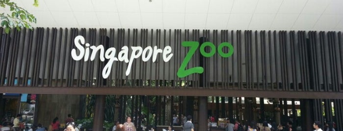 Singapore Zoo is one of To-Do in Singapore.