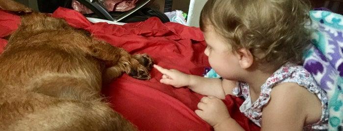 Retiro mimado de Hurley para perros pequeños is one of Lugares favoritos de Tamie.