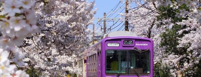 嵐電北野線 桜のトンネル is one of 撮り鉄スポット.